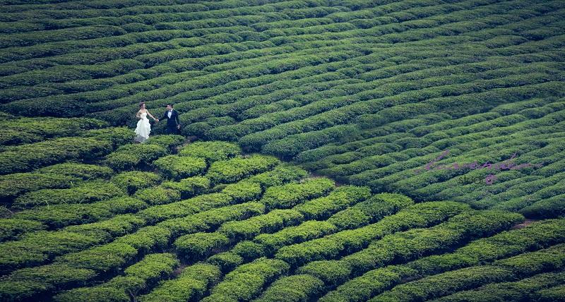 chụp hình cưới ở đồi chè cầu đất đà lạt