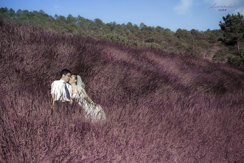 chụp hình cưới trên đồi cỏ hồng đà lạt