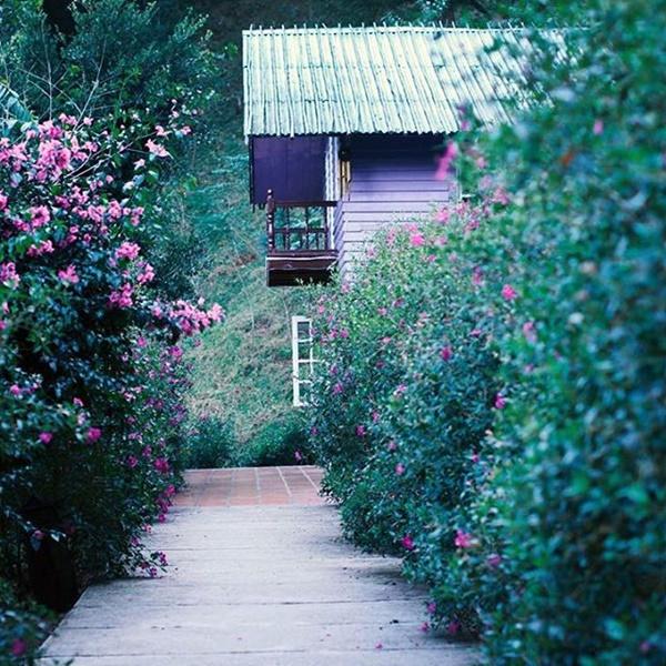 địa điểm chụp ảnh cưới lý tưởng ma rừng lữ quán