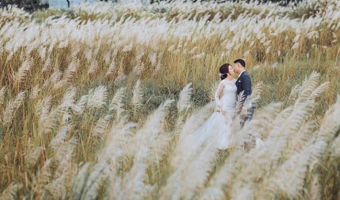 Kết quả hình ảnh cho lavender studio đồng cỏ lau